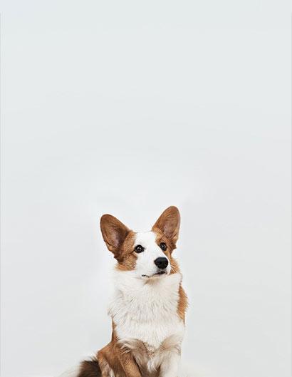 Mitarbeiterfoto von Bürohund Freya